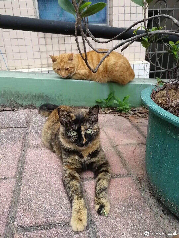你们两怎么肥事?有猫腻??