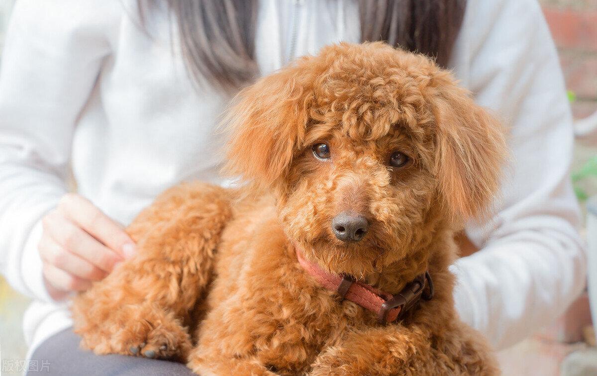 最热情的七种狗狗,见谁都当成老朋友,适合新手养
