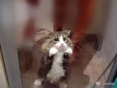 猫 尿毒 症
