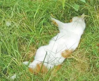 躺在草丛里再也没有呼吸的小猫