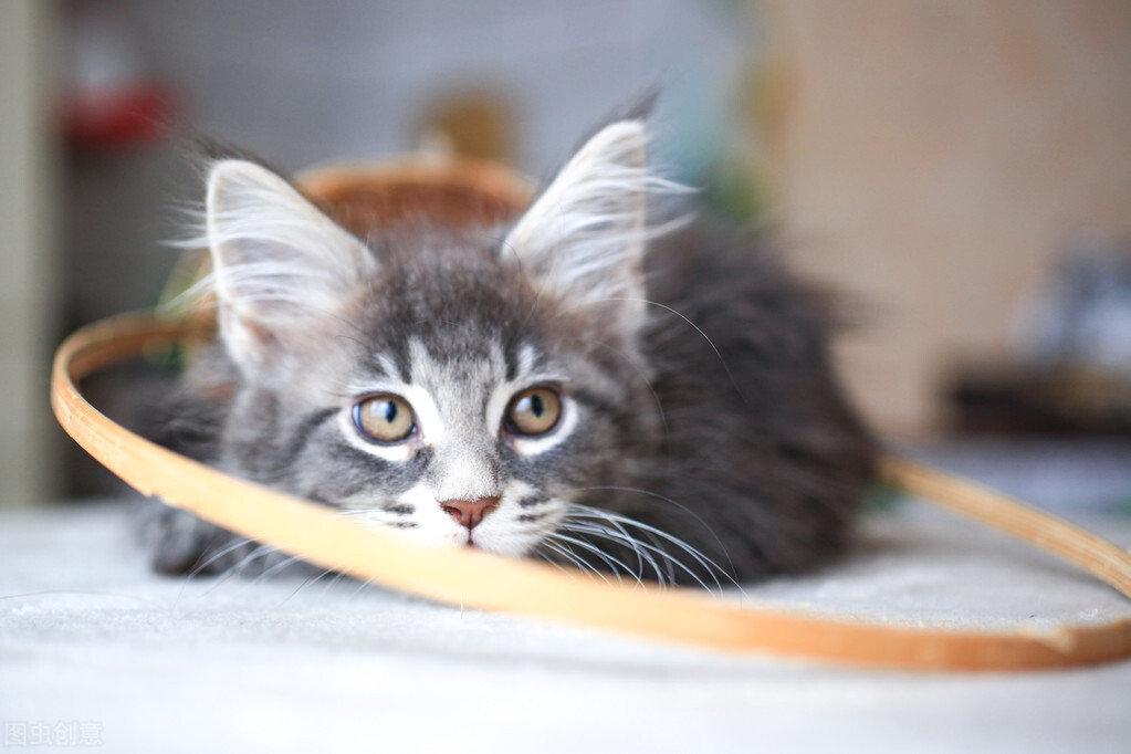 猫咪一生是不是只认一个主人呢?