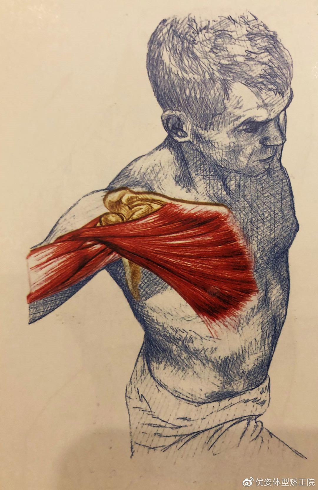 胸大肌拉伸