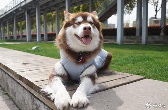王思聪爱犬可可