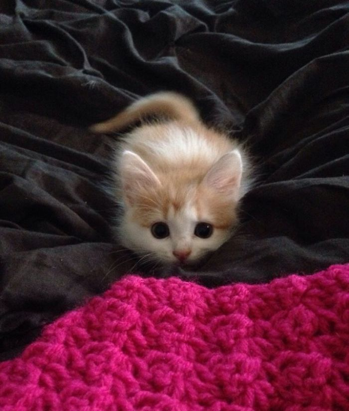 这些准备实施第一次偷袭的小猫咪,被主人抓拍到了