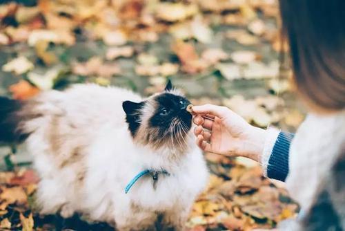养猫有什么好处和坏处,想养猫的人要牢记,以后用得上