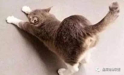 猫屎臭?还被猫屁攻击?铲屎官:我太难了!