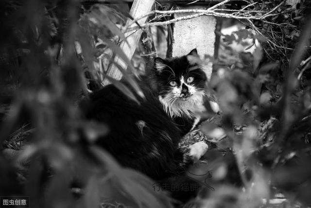 国庆假期把猫放在家,回来后猫咪怎么回事