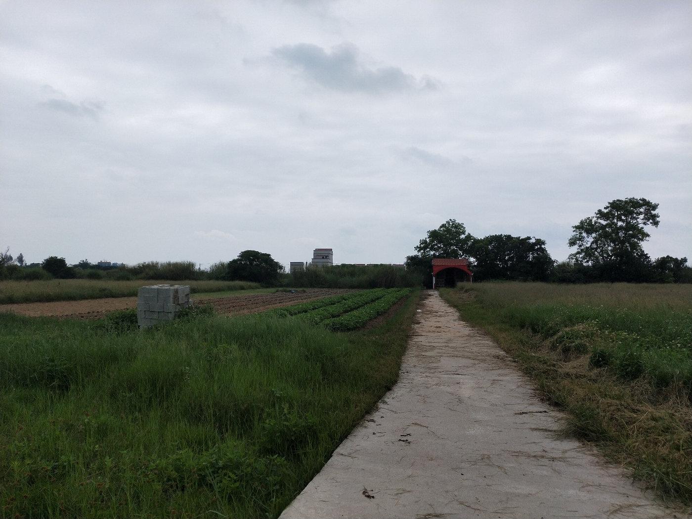 田野中的小路