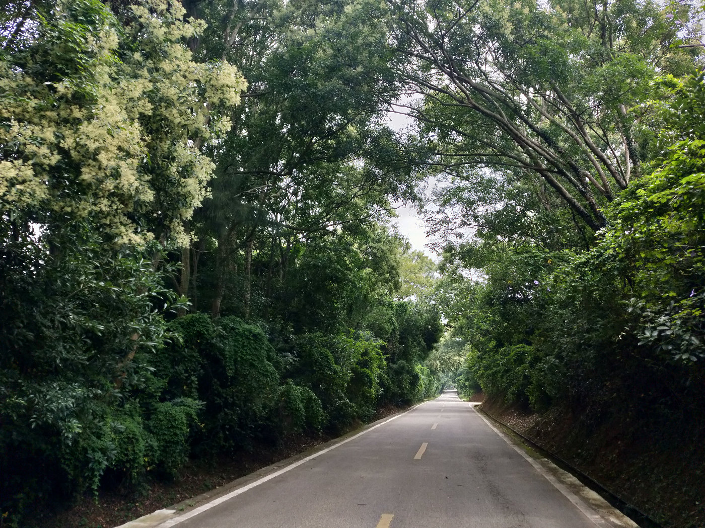 道路两旁的树长得特别茂盛