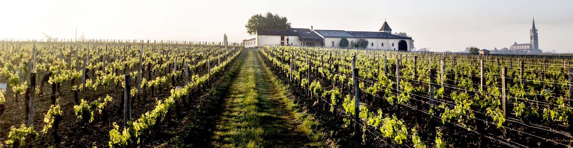 教堂园酒庄葡萄园(图片来源:closleglise.fr)