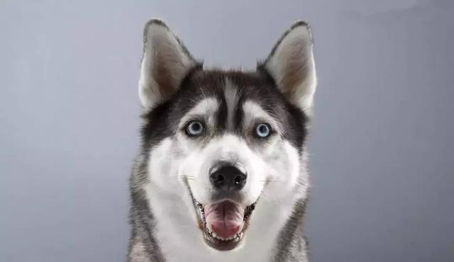 洞悉狗狗心理,成就宠物主宰者!