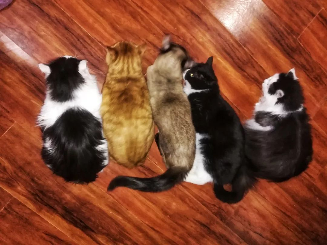 猫咪正在排队等待梳毛中